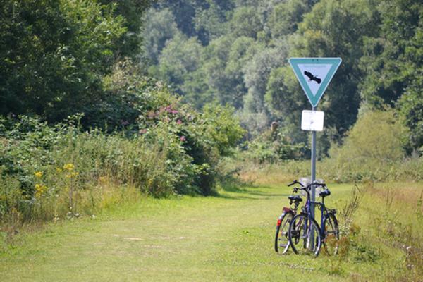 Grafik: Im Wald abgestelltes Fahrrad